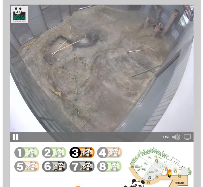 上野動物園のシャンシャンがライブ動画で観れるんですね